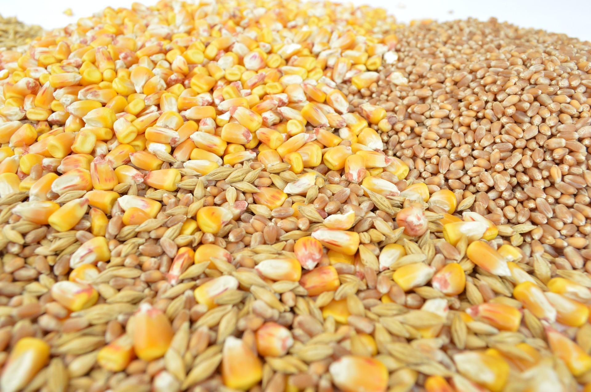 スーパー大麦バーリーマックスとは